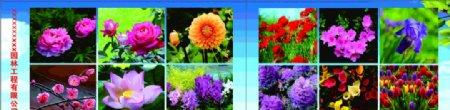 园林花卉图片