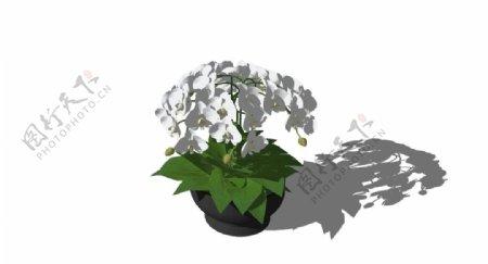 室内盆栽SU模型图片