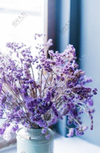 紫色的薰衣草图片