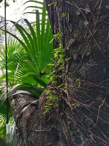 树木植物图片