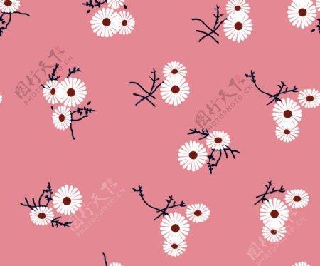 小菊花图片