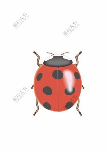 卡通矢量瓢虫图片