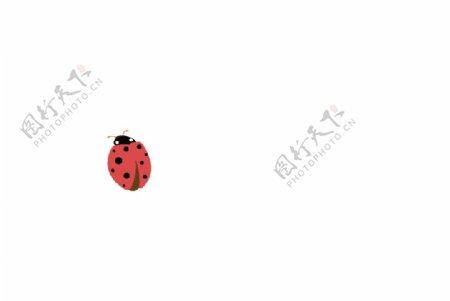 矢量瓢虫素材图片