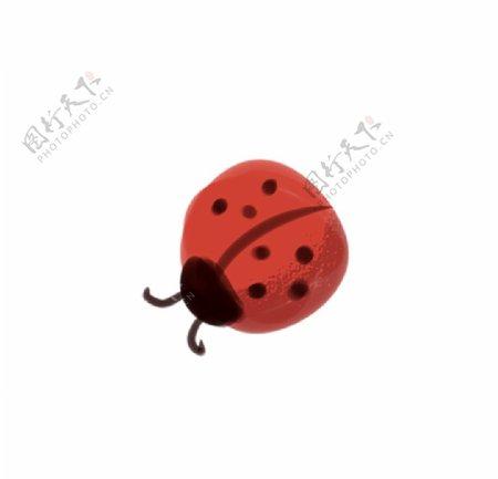 简约手绘瓢虫图片