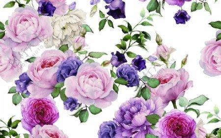 手绘玫瑰图片