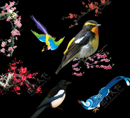梅花小鸟图片