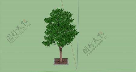树SU模型图片