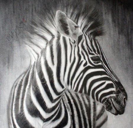 素描斑马图片