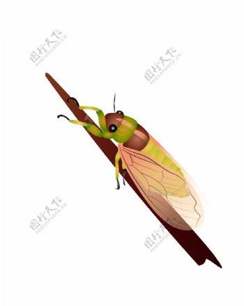 知了卡通夏日昆虫元素素材图片