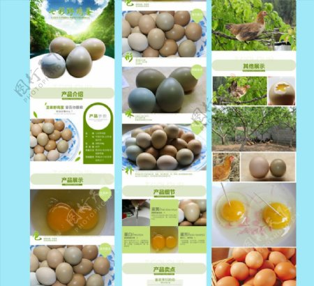 七彩野鸡蛋详情页图片