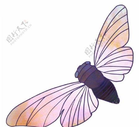 张开翅膀的知了手绘图片