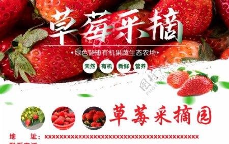 草莓采摘园图片
